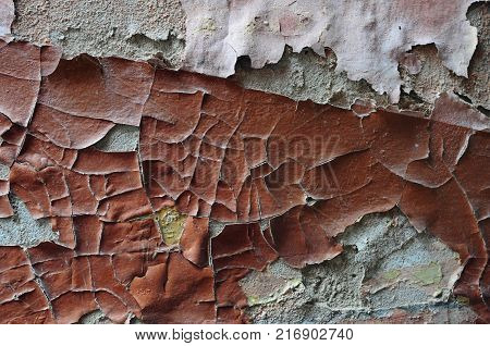 Wall is eroded by water and mold: distorted fractured paint disappears from the surface, the texture breaks down.