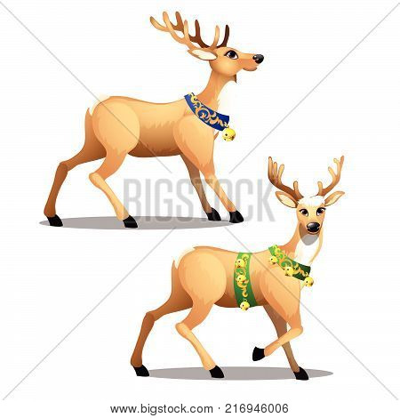 Set of animated Christmas deer with beautiful large horns, decorated collars and golden jingle bells isolated on white background. Vector cartoon close-up illustration.