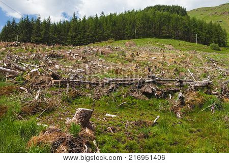 Pine tree forestry exploitation in a sunny day near Glencoe, in the Highlands of Scotland. Stumps and logs show that overexploitation leads to deforestation endangering environment and sustainability.