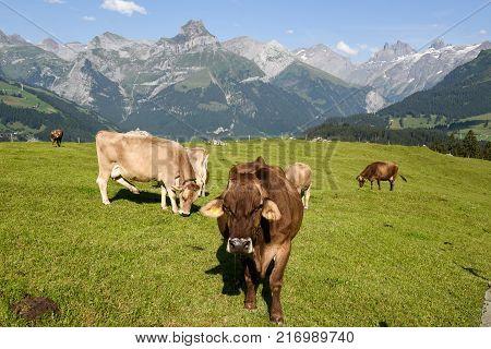 Rural Landscape At The Village Of Engelberg On Switzerland