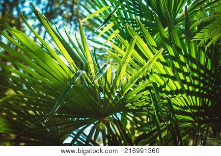 Bright green leaves of a palm tree on blue sky background