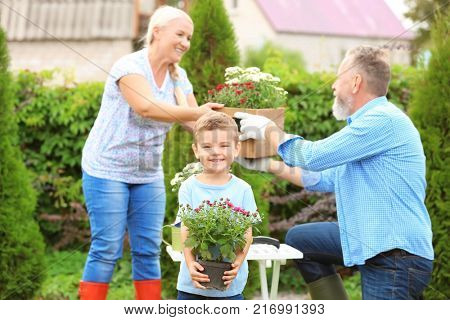 Little boy holding blooming plant while his grandparents working in garden
