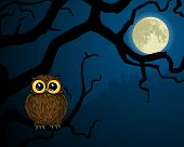 Illustration of cute little owl on branch and full moon poster