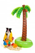 Portrait of a dog on vacation on a tropical beach poster