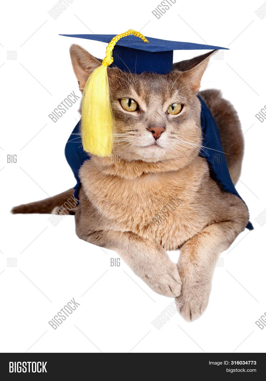 картинка кот в мантии компактным размерам