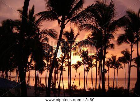 Sunset & Palms 2