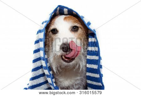 Funny Dog Puppy Wrapped With A Blue Striped Towel Ready For A Bath, Linking Its Face. Isolated On Wh