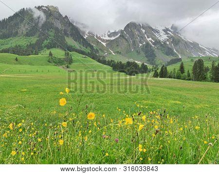 Summer wildflowers and mountain view in Switzerland