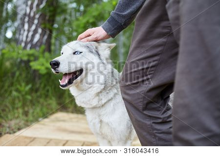 Dog kennel with Siberian Husky. Portrait of a beautiful dog in the kennel poster