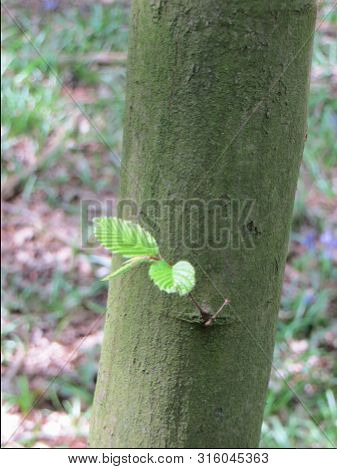 Leaves Soft Branch Wood Shoots From The Trunk Tree Woodland