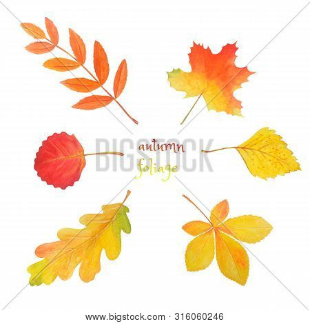 Abstract Watercolor Illustration With Autumn Foliage For Decorative Design. Autumn Set: Colorful Lea