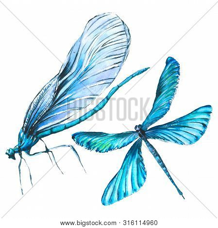 Exotic Dragonfly Wild Insect. Watercolor Background Illustration Set. Isolated Dragonfly Illustratio