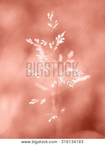 Blade Of Grass On Natural Bokeh Background