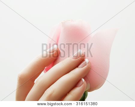 Manicure, Hands Spa Beautiful Woman Hands, Soft Skin, Beautiful Nails With Pink Rose Flowers Petals.
