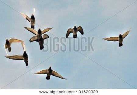 Pidgeon's lift-off