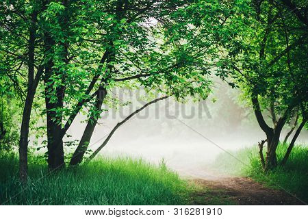 Scenic Landscape With Beautiful Lush Green Foliage. Footpath Under Trees In Park In Early Morning In