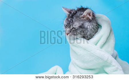 Funny Smiling Wet Gray Tabby Cute Kitten After Bath Wrapped In Green Towel With Big Eyes. Just Washe
