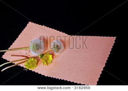 Dandy Card