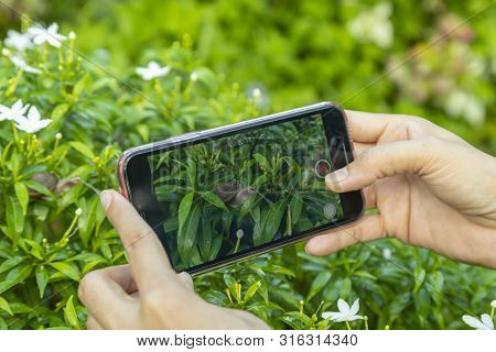 The hands of Asian women are using smartphones to record video or footage snail saliva amidst green nature. poster