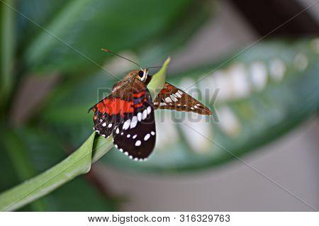 Mariposa Monarca Monarch Butterfly En Convivencia Con La Naturaleza