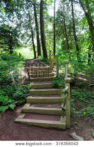 Hand Crafted Wood Steps Leading Hikers Through The Woods To The Top, Tall Trees And Pretty Plants Gr