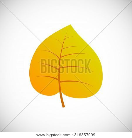 Yellow Poplar Leaf. Autumn Leaf Of A Tree On A White Background. Vector Illustration