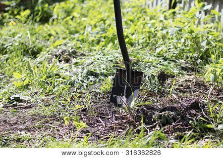A Garden Black Spade Sticks Out In The Ground. Home Gardening, Landscaping, Garden Tools. Green Gras