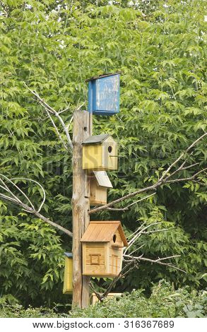 Lots Of Colorful Wooden Birdhouses On A Tree.