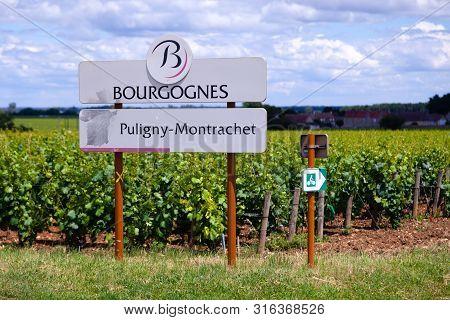 France Burgundy 2019-06-20 Beautiful Scenic Summer Landscape Of Bourgogned Puligny-montrachet Grand
