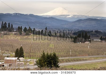 Pear Orchard In Hood River Oregon