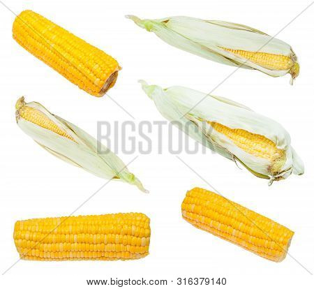 Set From Fresh And Boiled Ears Of Corn Isolated On White Background