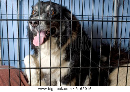 A border collie at a dog pound or pet store. poster