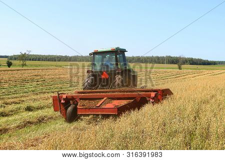 Riversdale, Ontario / Canada - August 7, 2019 - Farmer Cutting Grain For Silage Driving A Green Trac