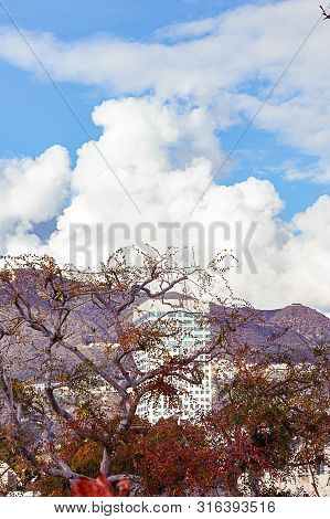 sycamore trees with highrise, mountains and clouds poster