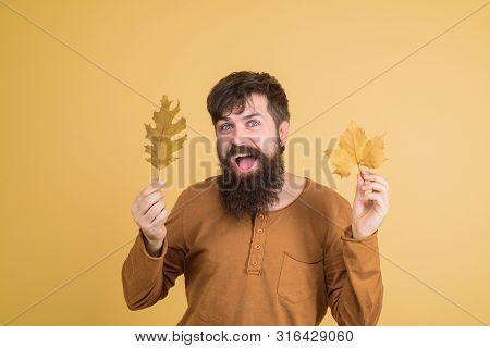Bearded Man With Autumn Golden Leaf. Seasonal Autumn Fashion. Men Fashion. Sales. Discount. Happy Ma
