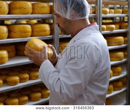 Cheesemaker checking ready product in a storage room