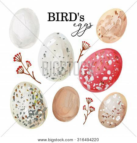 Hand-drawn Spotted Avian Eggs And Branches With Berries
