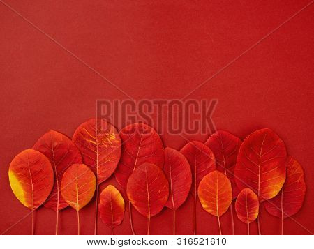 Minimalist Composition Of Red Fallen Leaves Forming Symbolic Autumn Grove. Autumn Forest Or Thanksgi