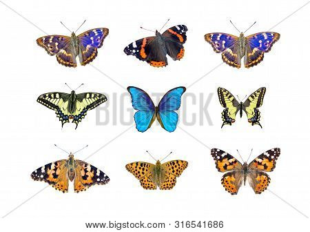 Bright Multicolored Butterflies Isolated On White. Collection Of Butterflies For Design. Morpho Butt