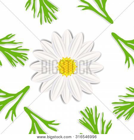 Abstract Daisy With Leaves On A White Background, Modern Seamless Pattern.