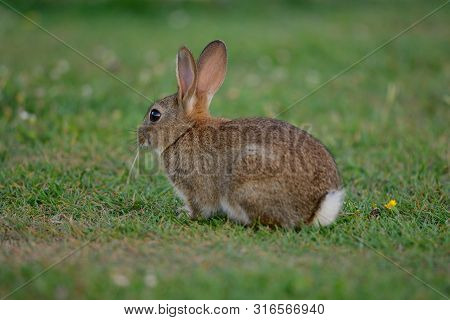 --portrait Of A Rabbit Sitting In A Meadow