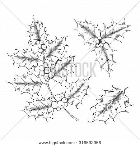 Vector Hand Drawn Holly, Ilex Branch With Berry And Leaves, Mistletoe Set.