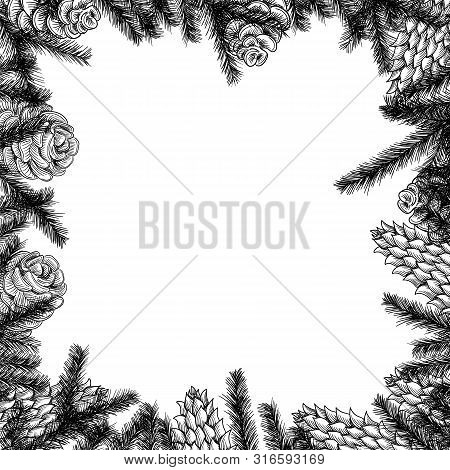 Cones Frame And Pine And Spruce Tree Branches. Vector Sketch Hand Drawn Illustration.