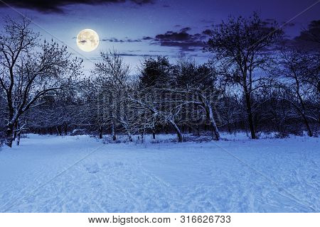 Park In Winter At Night. Beautiful Nature Scenery In Full Moon Light.