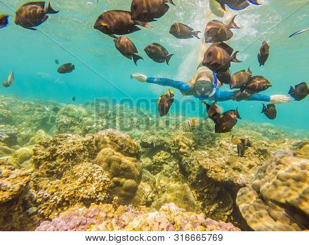 Happy Woman In Snorkeling Mask Dive Underwater With Tropical Fishes In Coral Reef Sea Pool. Travel L