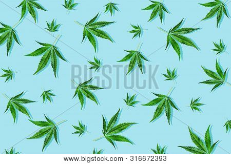 Trendy Sunlight Cbd Pattern With Green Leaf Cannabis On A Light Blue Background. Minimal Concept