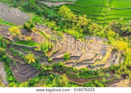 Green Cascade Rice Field Plantation At Bali, Indonesia