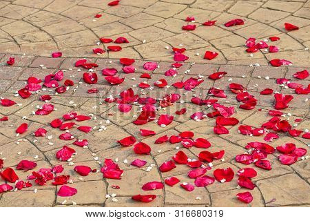 Rose Petals Laying At The Ground After Wedding Ceremony. Rose Petals In The Street On Weddings Day.
