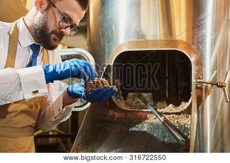 Side View Of Professional Male Brewer In Glasses And Protective Gloves Examining Quality Of Grist. C