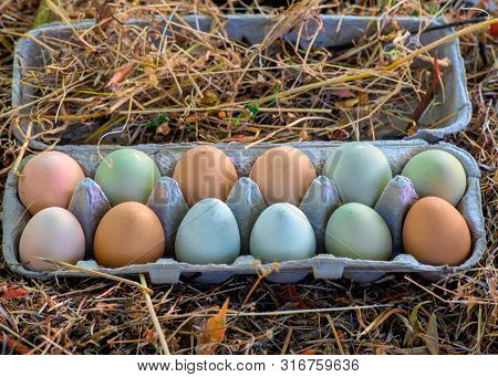 One Dozen Unwashed Colorful Chicken Eggs In Open Cartonon Dried Grass Viewed From Above- Free-range